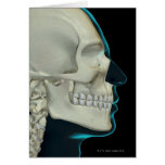 Bones of the Head and Face 2 Greeting Card