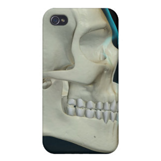 Bones of the Head and Face 2 iPhone 4 Case