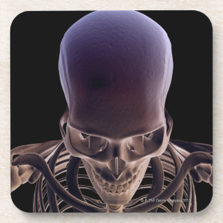 Bones of the Head and Face 3 Beverage Coasters