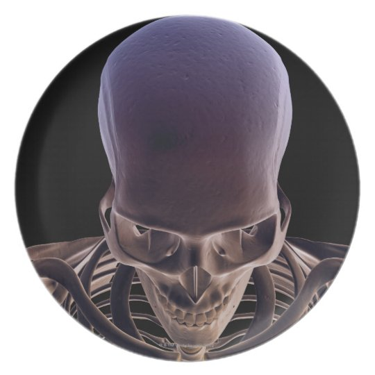 Bones of the Head and Face 3 Melamine Plate