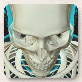 Bones of the Head and Face Beverage Coasters
