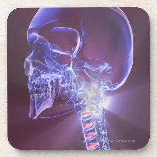 Bones of the Head and Neck 4 Coaster