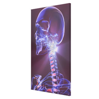 Bones of the Head and Neck 5 Canvas Print
