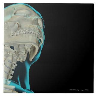 Bones of the Head and Neck 5 Ceramic Tile