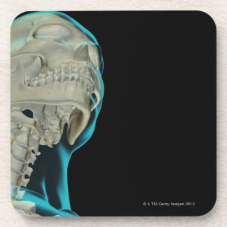 Bones of the Head and Neck 5 Drink Coaster