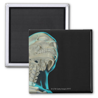 Bones of the Head and Neck 5 Magnet