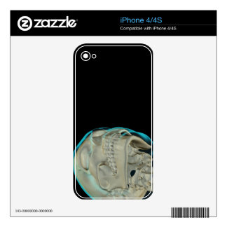 Bones of the Head and Neck 5 Skin For The iPhone 4S