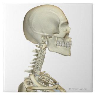 Bones of the Head and Neck 6 Ceramic Tile