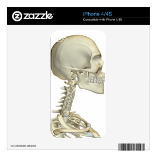 Bones of the Head and Neck 6 Decal For iPhone 4
