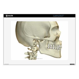 Bones of the Head and Neck 6 Decal For Laptop