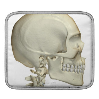 Bones of the Head and Neck 6 iPad Sleeves