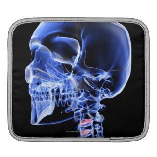 Bones of the Head and Neck 7 iPad Sleeve