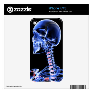 Bones of the Head and Neck 7 iPhone 4 Decal