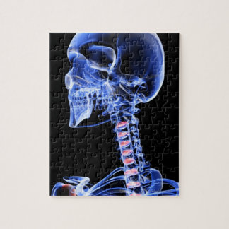Bones of the Head and Neck 7 Jigsaw Puzzle