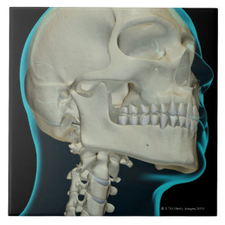 Bones of the Head and Neck 8 Ceramic Tile