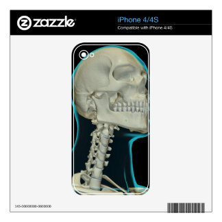 Bones of the Head and Neck 8 Decals For iPhone 4