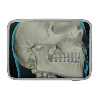 Bones of the Head and Neck 8 MacBook Air Sleeves