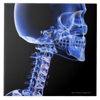 Bones of the Head and Neck Ceramic Tile