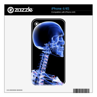 Bones of the Head and Neck iPhone 4 Skins