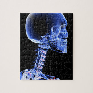 Bones of the Head and Neck Jigsaw Puzzle