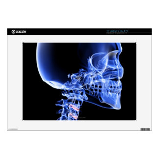 """Bones of the Head and Neck Skin For 15"""" Laptop"""