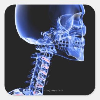 Bones of the Head and Neck Square Sticker