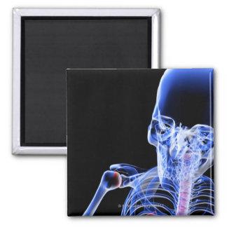Bones of the Head Magnet