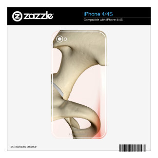 Bones of the Hip 2 iPhone 4 Decal