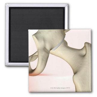 Bones of the Hip 2 Magnet