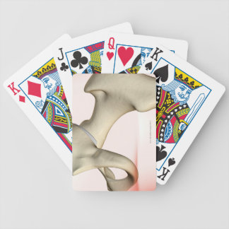 Bones of the Hip 2 Playing Cards