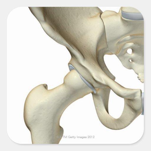 Bones of the Hip 5 Square Sticker