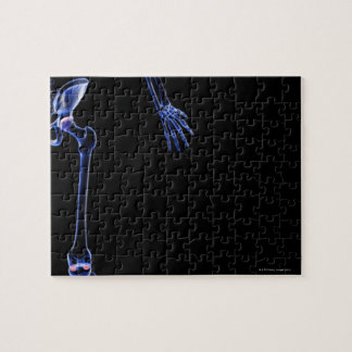 Bones of the Hip Jigsaw Puzzle