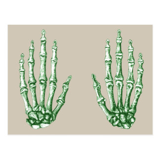 Bones of the Human Hand Postcard