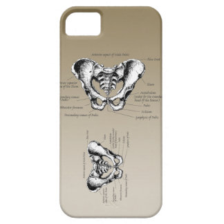 Bones of the Human Pelvis iPhone SE/5/5s Case