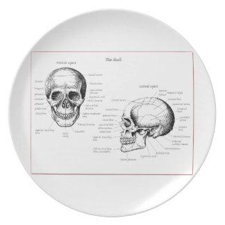 Bones of the human skull dinner plate