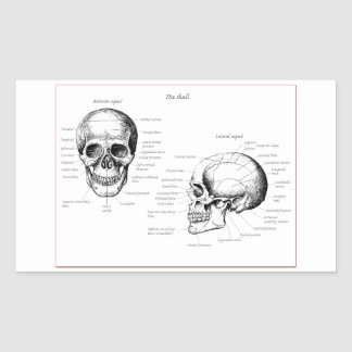 Bones of the human skull rectangular sticker