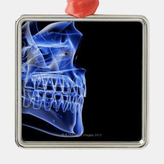 Bones of the Jaw Ornaments