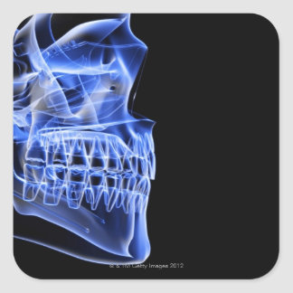 Bones of the Jaw Square Stickers