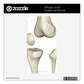 Bones of the Knee 5 iPhone 4S Decal