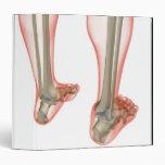 Bones of the Leg 3 Binders