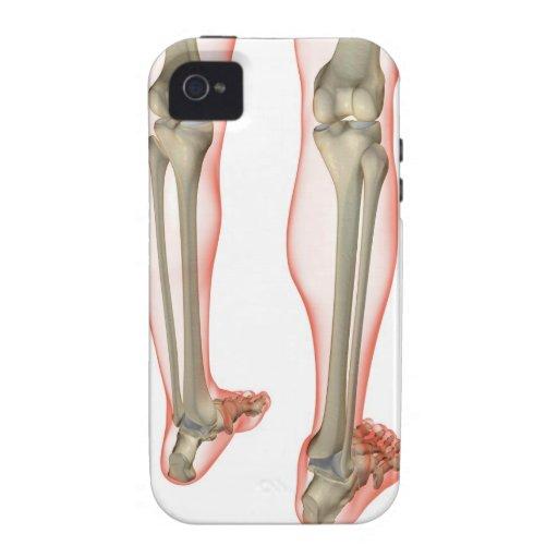 Bones of the Leg 3 Case-Mate iPhone 4 Cases
