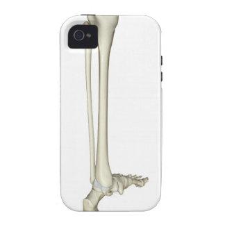 Bones of the Leg 5 Case-Mate iPhone 4 Cover