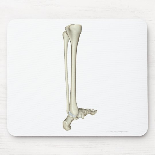 Bones of the Leg 5 Mouse Pad