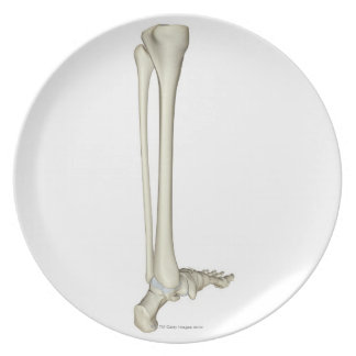 Bones of the Leg 5 Party Plate