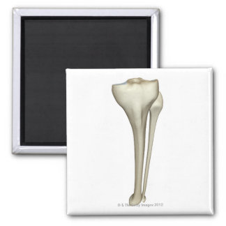 Bones of the Leg 6 Magnet