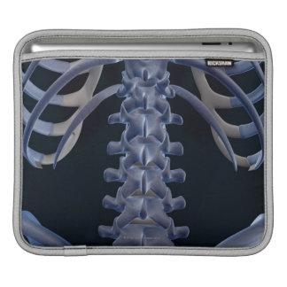 Bones of the Lower Back 2 iPad Sleeve