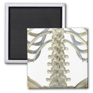 Bones of the Lower Back 4 2 Inch Square Magnet