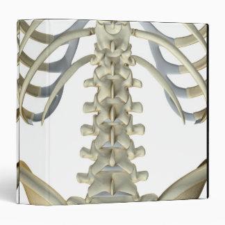 Bones of the Lower Back 4 3 Ring Binder