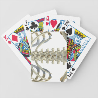 Bones of the Lower Back 4 Bicycle Poker Deck