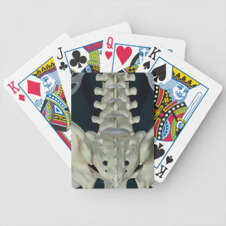 Bones of the Lower Back Bicycle Card Deck